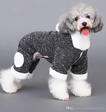 45 Elegant Dogs with Clothes