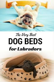Cheap Dog Beds For Sale The 25 Best Cheap Dog Beds Ideas On Pinterest Cheap Puppies
