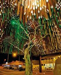 tree of knowledge festival what s on coast daily