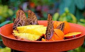 all about butterflies the butterfly resource center for