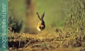 rabbit bunny rabbit behaviour do you a happy bunny