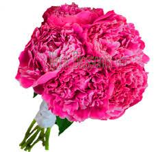 peonies flower delivery peonies wedding flowers buy wholesale peonies in bulk pink