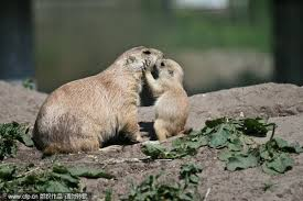 「動物愛媽咪」的圖片搜尋結果