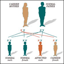 Cause Of Color Blindness Neurological Disorders Gender And Disease