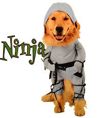 ninja costume for halloween ninjadogcostume jpg