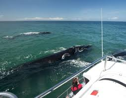9 tips for successful whale watching