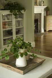 swedish ivy indoor plants in the small vase intriguing swedish