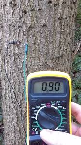 power from trees and using this power to collect data form the