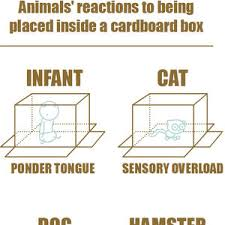 Cardboard Box Meme - animal s reactions to being placed inside a cardboard box by