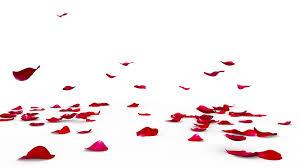 red rose petals flying on the floor on both sides alpha mask