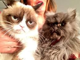 Colonel Meow Memes - internet mourns death of colonel meow