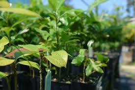 planting natives nursery kuranda envirocare