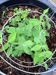 vegetables landscaping tips