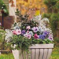 Flower Planter Ideas by Best 10 Winter Container Gardening Ideas On Pinterest Winter