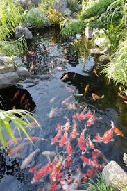 backyard with koi pond and stones beautiful koi pond as water