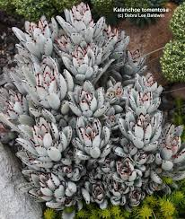 36 best house plants images on pinterest plants gardening and
