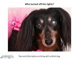 Causes Of Sudden Blindness In Dogs Diapositiva1 Jpg