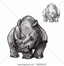 rhino images illustrations vectors rhino stock photos u0026 images