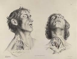 Right Side Human Anatomy Historical Anatomies On The Web Richard Quain Home