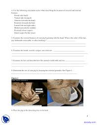 forensic dissection of a fetal pig biology lab manual docsity