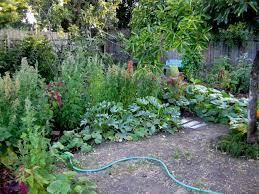 Backyard Farms Backyard Farming Your Backyard Farm