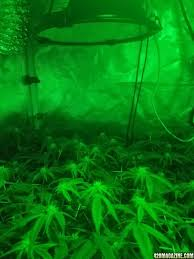 indoor 2x2 micro grow zts first indoor grow give me your 2 cents