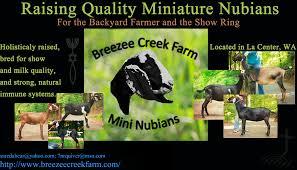 Farm Business Card Breezee Creek Farm Miniature Nubian Dairy Farm