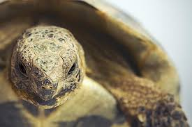 Tortoise Home Decor Lighting And Heating For Pet Turtles And Tortoises