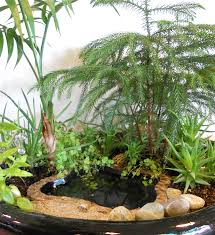 new miniature garden plants u0026 accessories for the new hobby the