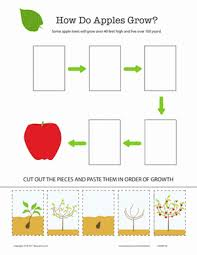 how does it grow apple tree worksheet education com