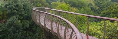 sensational winding tree canopy walkway land8