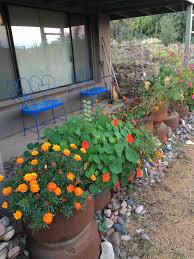 planters in front north side of house marigolds nasturtium