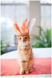 agamemnon archibald thanksgiving kittens