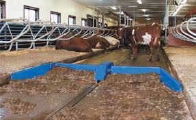 Cattle Barns Designs Cow Comfort 10 Walking Milkproduction Com