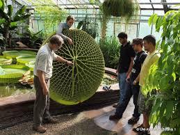 Tropische Pflanzen Im Garten Kit Botanischer Garten Startseite