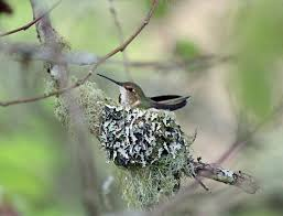 be on the lookout for bird nests u2013 fish and wildlife service news