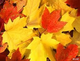 why do leaves change color science for