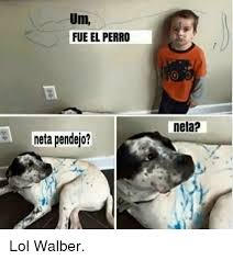 Neta Meme - um fueel perro neta pendejo neta lol walber lol meme on me me
