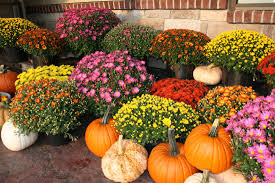 what to plant for the best autumn colours in your garden hipages