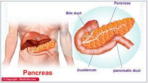 pancreas jpg
