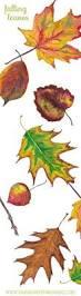 perfect fall leaf color season