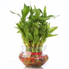 indoor plant finest best houseplants for low light with indoor