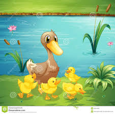 mother duck and her two ducklings stock photos image 31134673