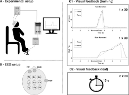 junior layout engineer rohm exam effect of subject training on a movement related cortical potential
