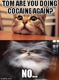 Cat Cocaine Meme - coke cat imgflip