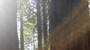 the japanese practice of u0027forest bathing u0027 has scientifically