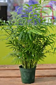top 5 houseplants fairview garden center