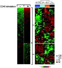 tracking cd40 signaling during germinal center development blood