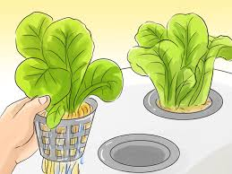 how to grow hydroponic vegetables 9 steps with pictures