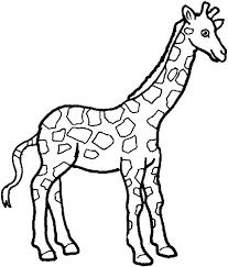 giraffe sketch art images clip art library